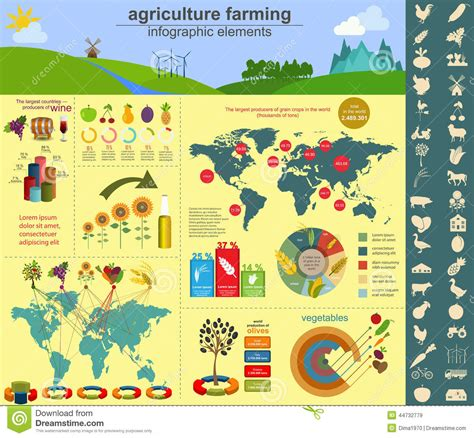 Backyard Wheat Agriculture Farming Infographics Stock Vector Image