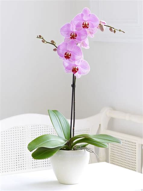 orchids to grow and how to grow on pinterest