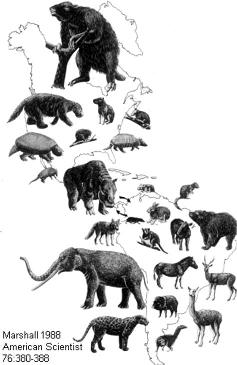 Extinctions of the Earth   HubPages