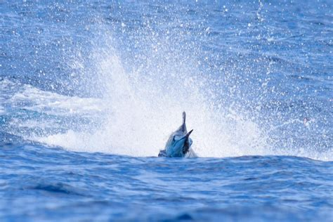 contender boats cost zancudo lodge contender costa rica shootout contender boats