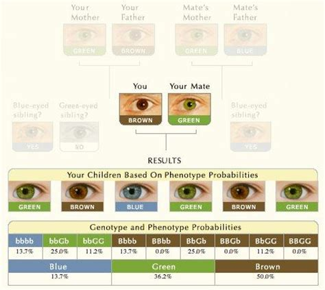 eye color calculator the 25 best eye color predictor ideas on baby
