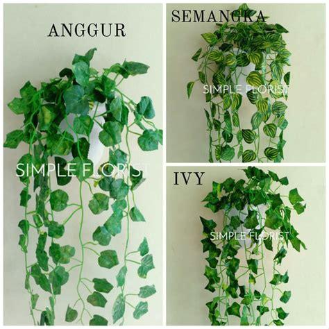 harga tanaman hias gantung plastik cat rumah minimalis