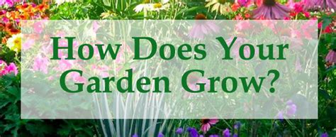 How Does Your Garden Grow by St Fisher Catholic Primary School Term 4