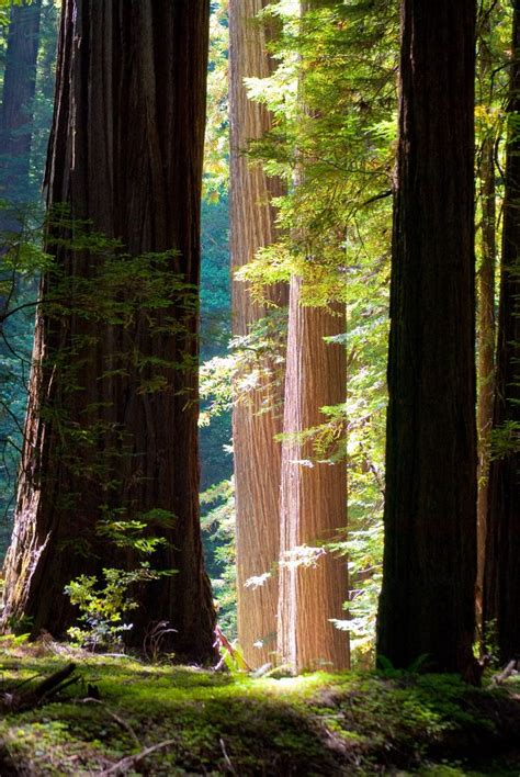 Cabins In Humboldt Redwoods State Park by 100 Best Images About Redwoods On The Giants