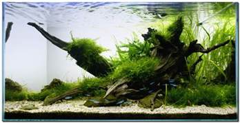 driftwood aquascape aquascape of the month november 2009 quot riverbank