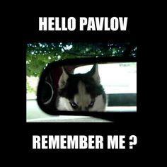 Remember Me Meme - behaviourist approach on pinterest experiment