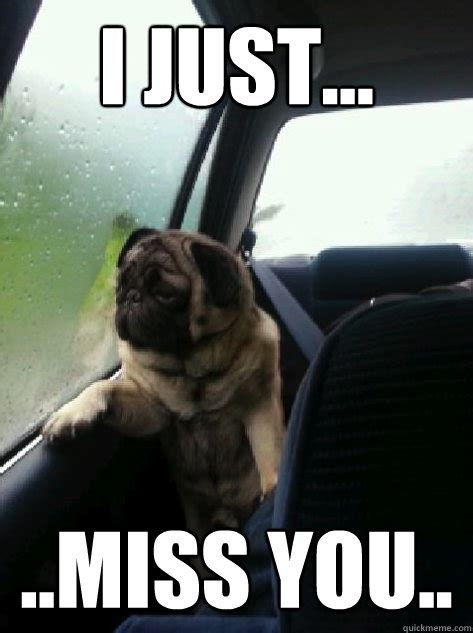 miss you pug introspective pug memes quickmeme