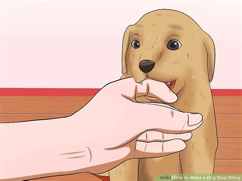 dog suddenly wants to be alone how to teach my dog growl on command 100 dog suddenly