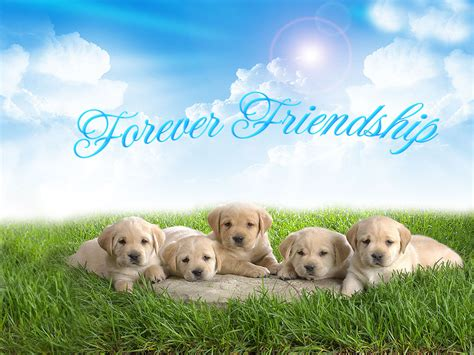 cute wallpapers quotes friendship friendship day wallpapers friendship day pics cute