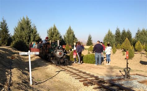 best 28 reedley christmas tree farm christmas trees