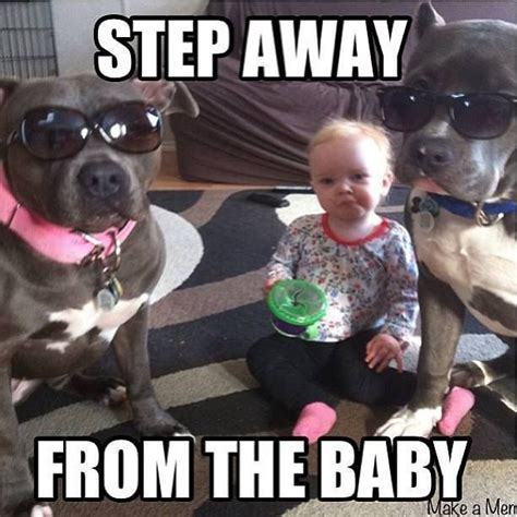 cool pit cool pit bulls protecting baby pitbull