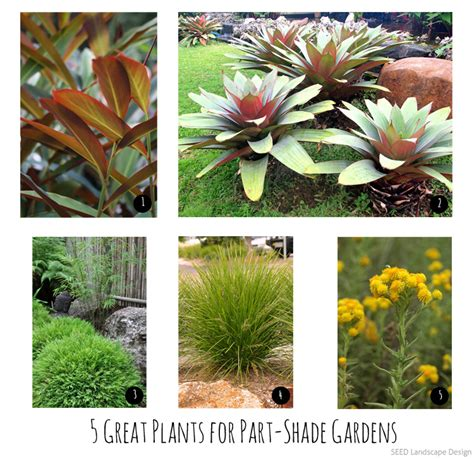 tropical plants brisbane 5 great plants for part shade gardens in brisbane seed