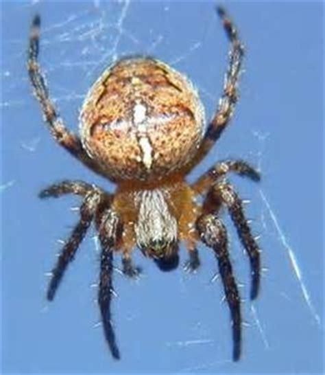 Garden Spider New Zealand New Zealand Garden Spider The Bad The Another