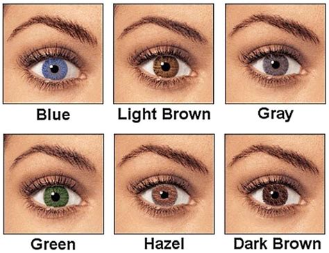 what is hazel eye color list of synonyms and antonyms of the word hazel