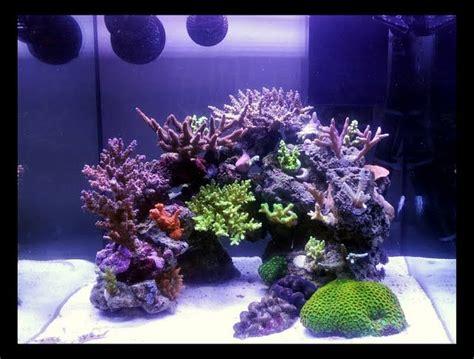 cube aquarium aquascape 17 best ideas about reef aquascaping on pinterest reef