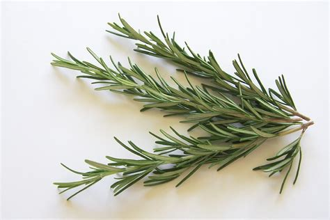 what s a good rosemary substitute spiceography