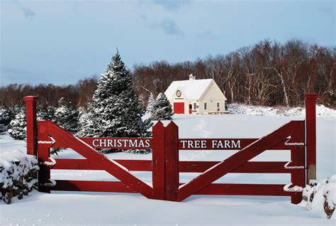 nh magazine best cut your own christmas tree your own tree in rhode island rhode island monthly