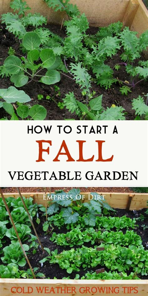 fall and winter vegetable garden 1000 ideas about winter vegetables on winter