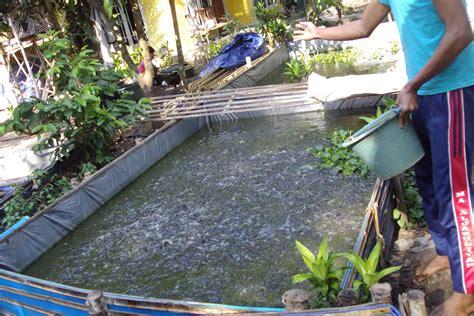 Pakan Ikan Lele metode ternak lele dengan kolam terpal okdogi