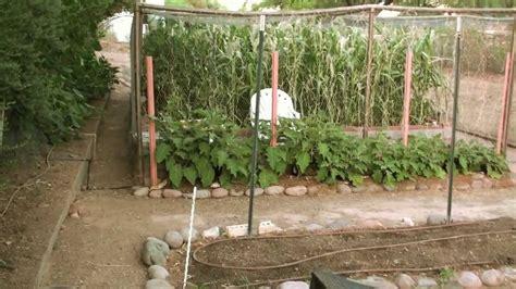 Vegetable Garden Arizona Vegetable Garden Update June 12