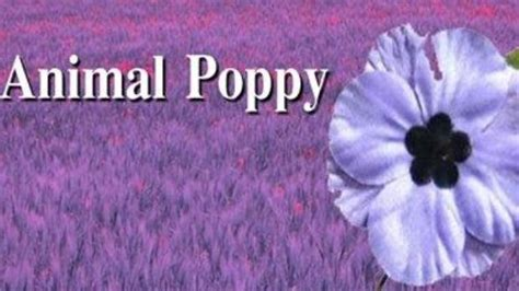 what color is poppy white purple what colour of poppy do you wear