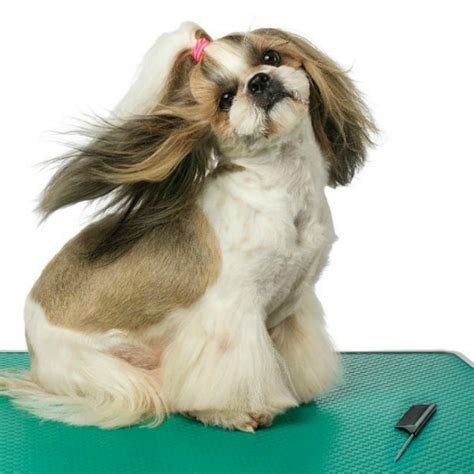 do you tip a groomer grooming tip category animal behavior college grooming tip category animal behavior