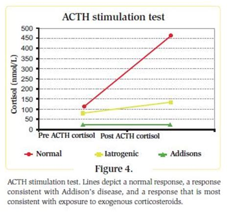 acth stimulation test vetgrad home the website for vets