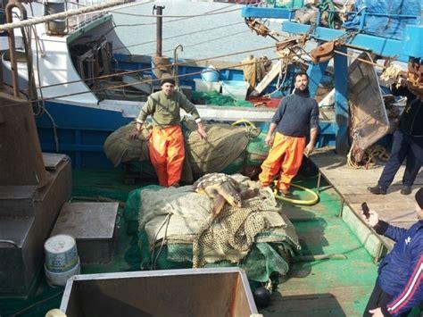 tartarughe marine alimentazione bisceglie recuperata una caretta caretta tartapedia