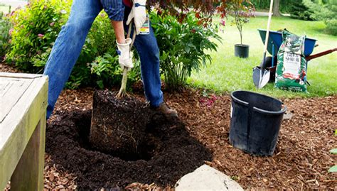 Landscaping Small Backyard Dig A Better Hole Plants Posts And More