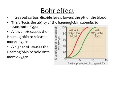 bohr effect diagram oxygen dissociation and bohr effect lesson 1 of 2
