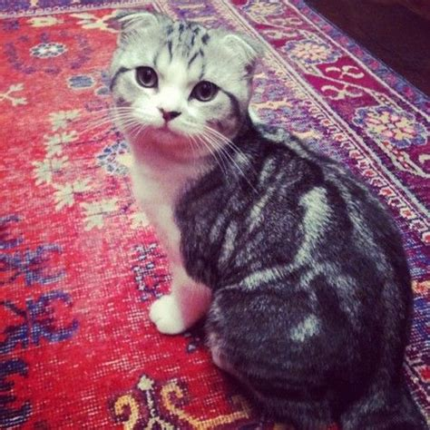 taylor swift belongs to which country best 25 taylor swift cat ideas on pinterest pictures of