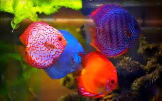 moving aquarium wallpaper ipad download