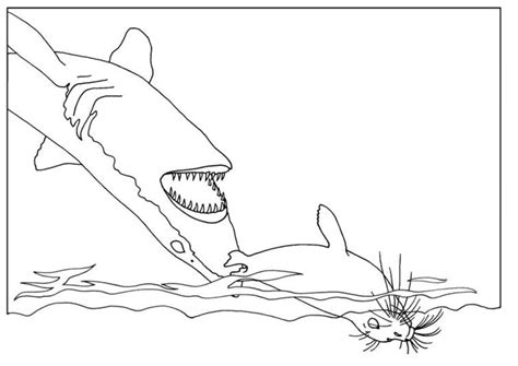 coloring book pages shark free printable shark coloring pages for
