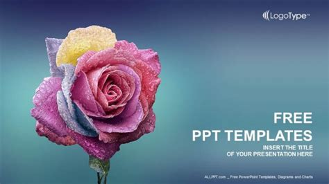 theme powerpoint rose multi colors rose powerpoint templates