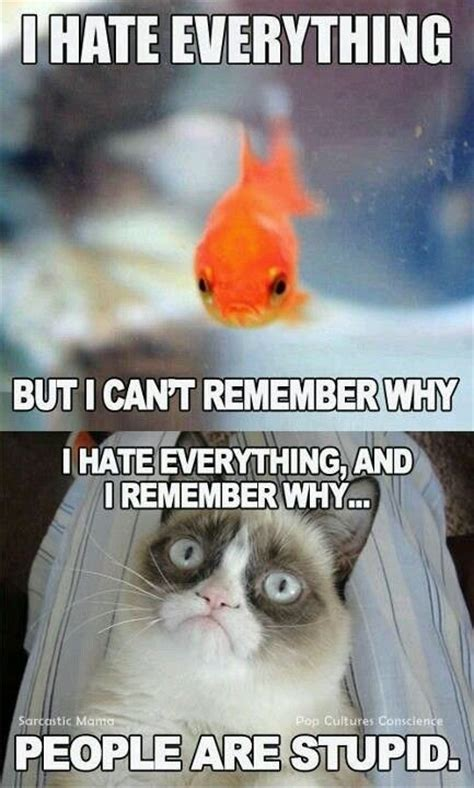 People Are Stupid Meme - stupid grumpy cat meme