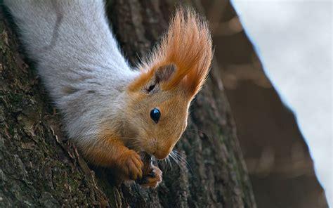 up squirrel squirrel wallpaper