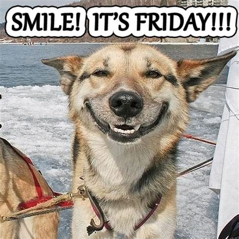 friday puppy 17 best images about smiling dogs on happy dogs happy puppy and apocalypse