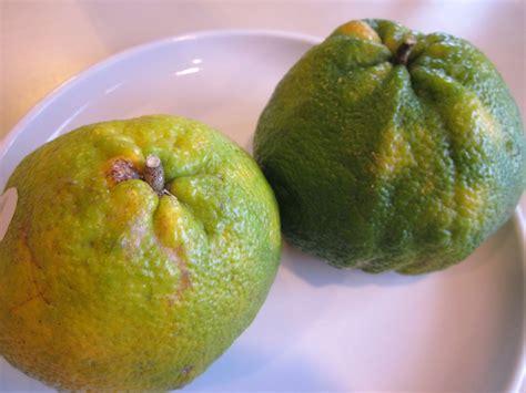 fruit exles ugli fruit image