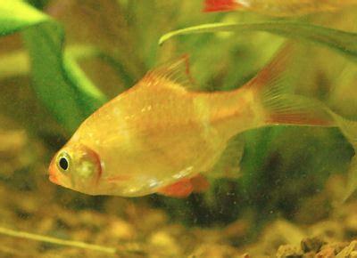 Pakan Ikan Hias Neon pondok air sentra ikan hias dan lobster katalog ikan