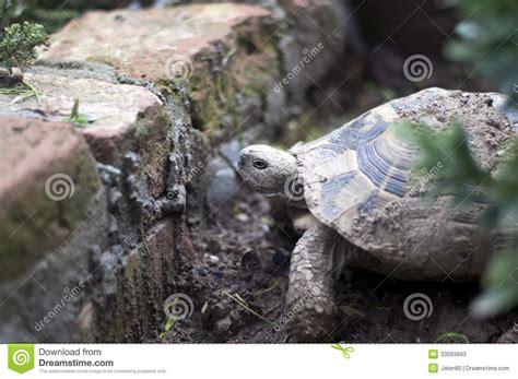 Garden Turtle by Garden Turtle Stock Photos Image 33093893
