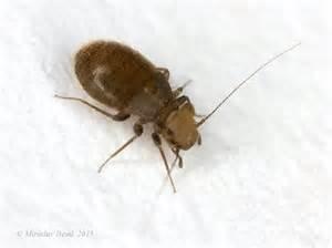 insecte dans ventana