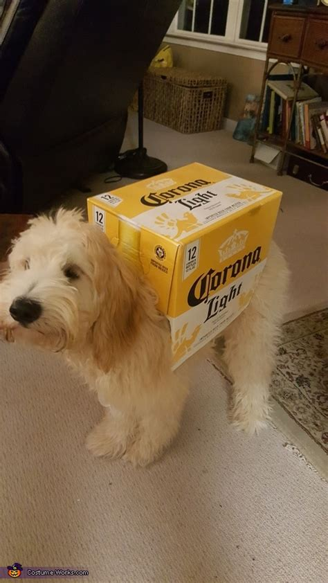 dogs carrying  box  corona beer costume photo