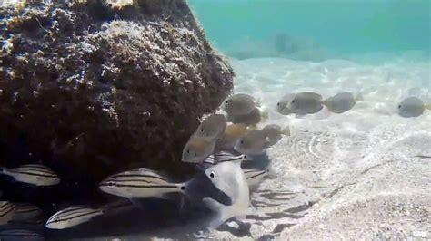 bathtub beach snorkeling snorkeling bathtub reef beach stuart florida underwater