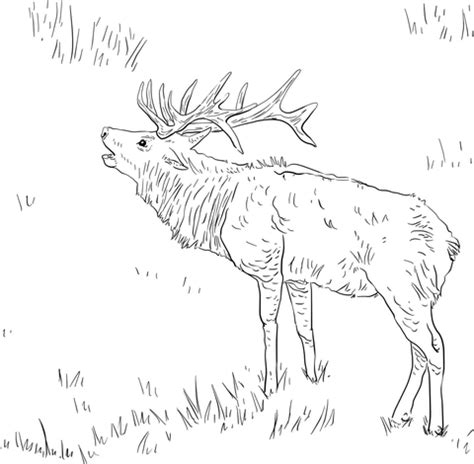 Pin Elk Coloring Page On Pinterest Elk Coloring Page