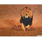 Free Download Lion Wallpaper Hd  Funonsite