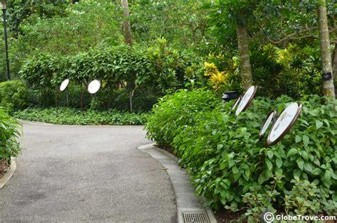 the singapore botanic gardens walking through nature