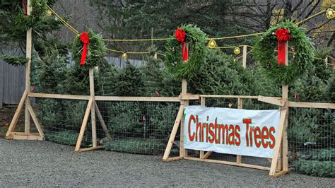 how to sell christmas trees cool springs nursery
