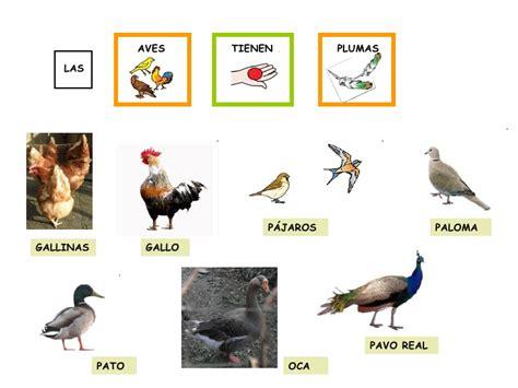 imagenes animales con plumas los animales 1