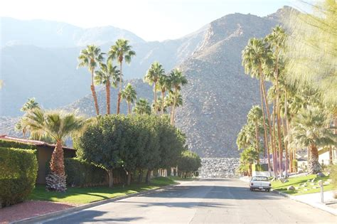 palm springs landscaping design oasis in palm springs