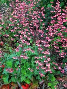 container plants for shade coral bells for the home